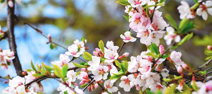 Spring is a wonderful time to enjoy shopping, dining, and the wonderful sights in Hunterdon County, NJ